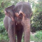 Photo of Millennium Elephant Foundation