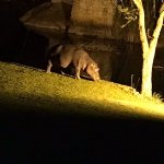 Foto de Hippo Hollow Country Estate