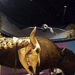 Prehistoric Exhibts