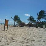 orca-image-1510765422798_large.jpg