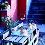 Gatti fuori del ristorante