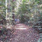 Bild från Phu Quoc National Park