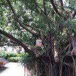 Mandarin Oriental, Sanya Foto