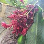 Flowering plant life