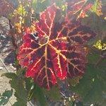 Opolo Vineyards Foto