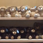 Bears in the gift shop, Three Bears Resort change location 701 Yogi Cir, Warrens, WI