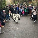 Photo de Zoo Zurich