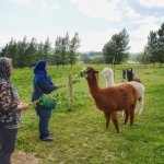 We loved the visit 😍.  The alpaca was sooo cute and Liz, with her knowledge on the alpacas and