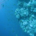 Life at the coral wall