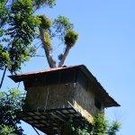 Tree hut room