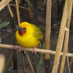 Photo of Themba's Birding and Ecotours