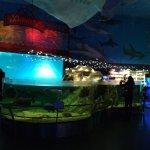 Photo of Sea World (Morsky SvEt)
