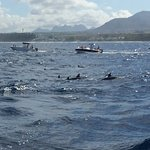 Photo of La Pirogue - Swim with the Dolphins