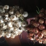 Onions and garlic hung from the attic