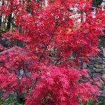 Portland Japanese Garden Foto