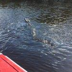 ..und zum Schluss der Grösste Alligator