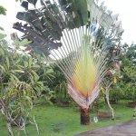 Photo of Herb Garden Pattaya