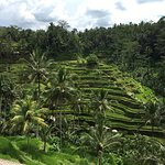 Photo de Tegalalang Rice Terrace