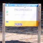 Foto de Plage de Palombaggia