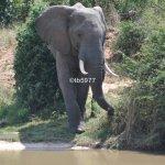 Elephant's Eye, Hwange Photo