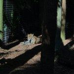 Photo de Brevard Zoo