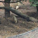 Photo de Zoo de Lille