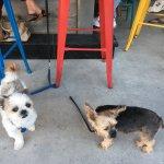 2 regulars Pongo and Rudy at dog friendly bar