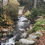 Lithia Park Foto