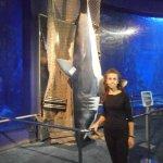 Escultura de tiburón.
