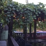 The grape leaves made a shady canopy