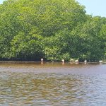 Photo de Mangroves of Dzinitun
