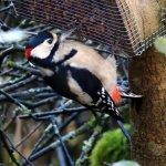 Woodpecker at Ken Dee.