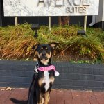 Bentley loved Avenue Suites!