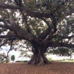 Beautiful exotic tree - closer than next photo