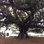Beautiful exotic tree