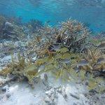 Foto de Sea Cow Snorkeling Trips