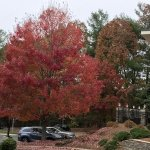 Fall foliage still in view from Hampton Inn in Asheville
