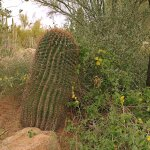 Some of the 55,000 desert plants to be found at the Desert Botanical Garden.