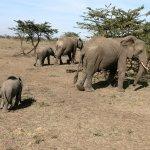 Foto de Eagle View, Mara Naboisho