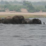 An elephant family crossing - such care