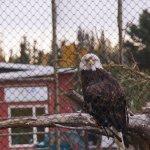 北米的な鳥(イーグル?)」
