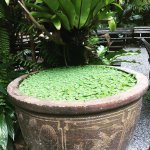 A pot in the gardens
