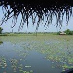 Foto de Coconut Lagoon