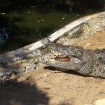 Photo of MadrasCrocodileBank