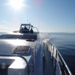 Eagle Wing Whale Watching Tours