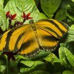 Beautiful butterfly exhibit 2