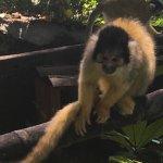 Photo de Zoo de Martinique - Habitation Latouche