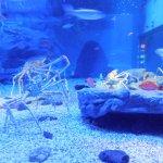 Gigantic deep bottom Crabs