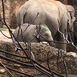 Photo of Zoo Zurich