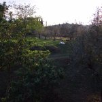 Photo of Agriturismo Bevignano